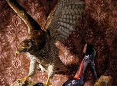 Hedwig Starosta – Fotografie